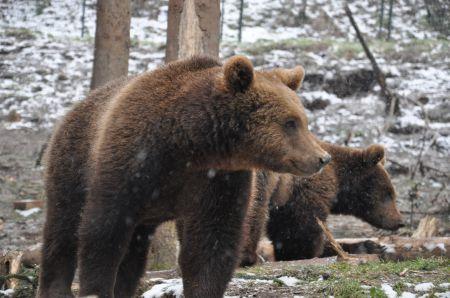 Besuch im Wolf- und Bärenpark